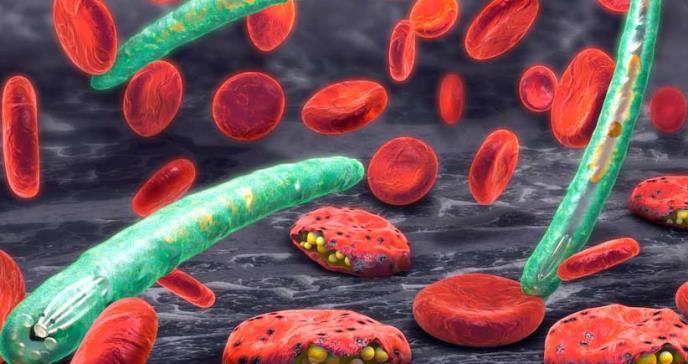 Cuáles son los tres parásitos más peligrosos y qué enfermedades pueden causar