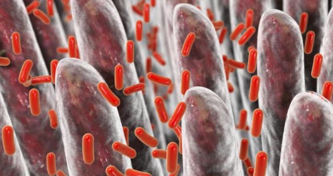 Relacionan enfermedades del cerebro con bacterias intestinales